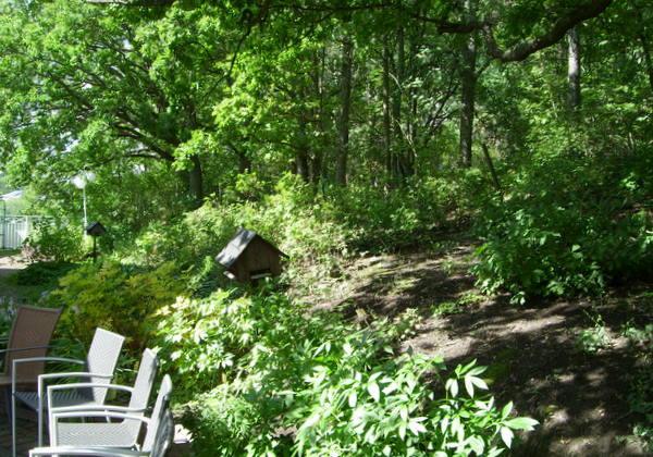 Puutarhassa puita, pensaita ja tuoleja.